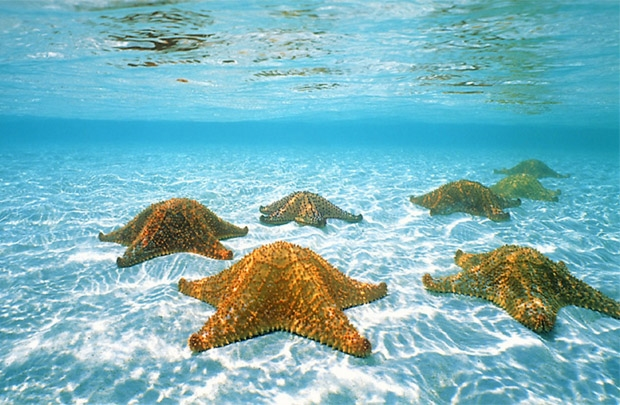 6 nguyên lý xây dựng chiến lược đại dương xanh